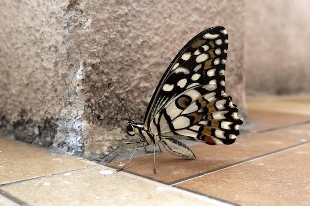 Foto de foco seletivo de uma borboleta colorida em um solo marrom