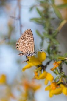 Foto de foco seletivo de uma borboleta em uma flor amarela