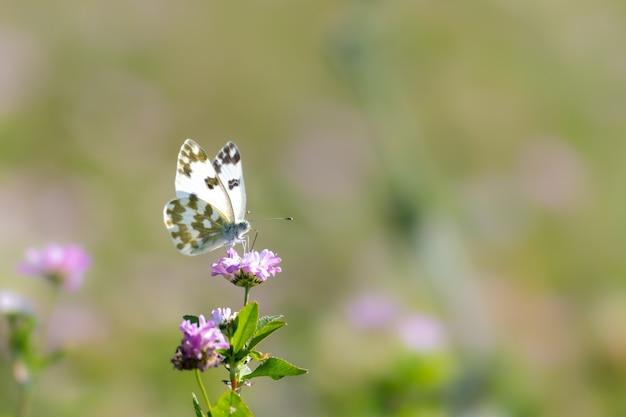 Foto de foco seletivo de uma borboleta em uma flor