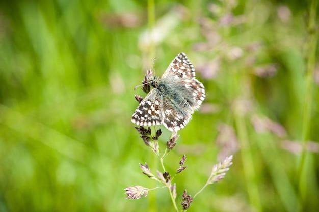 Foto de foco seletivo de uma borboleta em uma planta no jardim
