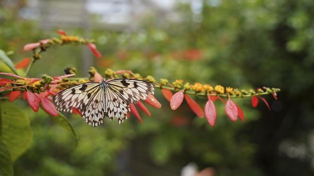 Foto de foco seletivo de uma borboleta empoleirada em uma flor