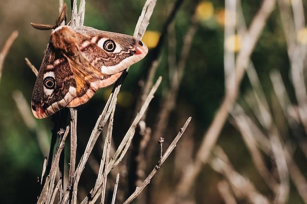 Foto de foco seletivo de uma borboleta magnífica nas hastes de madeira com um fundo desfocado