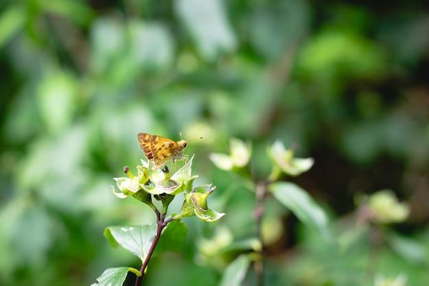 Foto de foco seletivo de uma borboleta marrom na vegetação