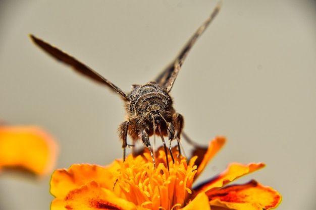 Foto de foco seletivo de uma borboleta na bela flor amarela