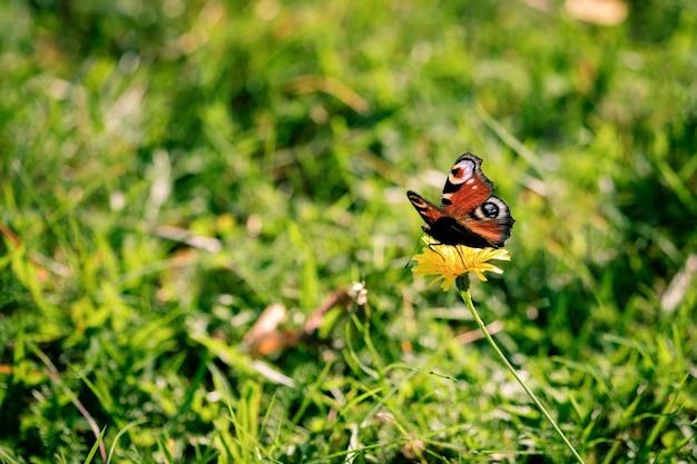 Foto de foco seletivo de uma borboleta sentada em uma flor silvestre no meio do campo