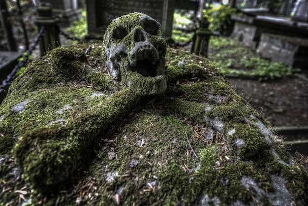 Foto de foco seletivo de uma caveira em um cemitério