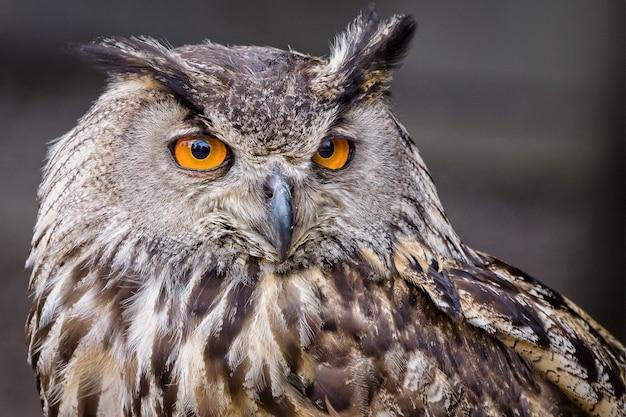 Foto de foco seletivo de uma coruja com olhos amarelos