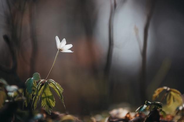 Foto de foco seletivo de uma flor branca desabrochando com vegetação à distância