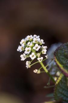 Foto de foco seletivo de uma flor branca fresca na floresta com um fundo desfocado