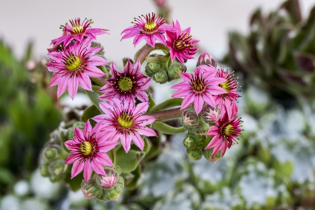 Foto de foco seletivo de uma flor rosa exótica no meio de um jardim