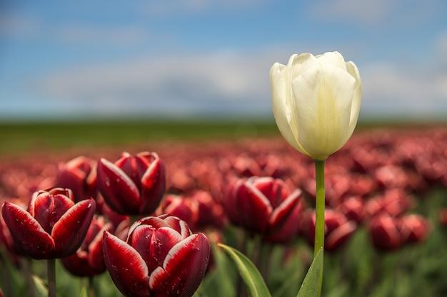 Foto de foco seletivo de uma flor vermelha e uma flor branca perto uma da outra