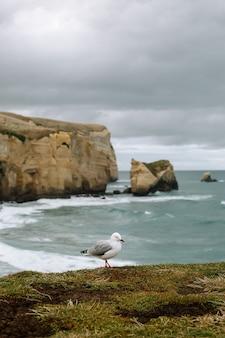 Foto de foco seletivo de uma gaivota adorável na grama verde sob pedras enormes