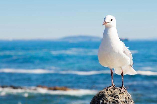 Foto de foco seletivo de uma gaivota branca em uma pedra