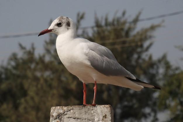 Foto de foco seletivo de uma gaivota branca empoleirada em uma superfície de pedra