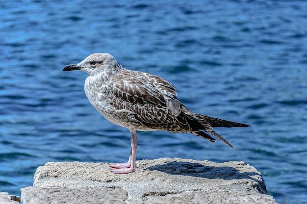 Foto de foco seletivo de uma gaivota empoleirada em uma rocha
