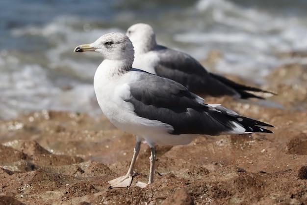 Foto de foco seletivo de uma gaivota empoleirada em uma superfície rochosa perto do mar