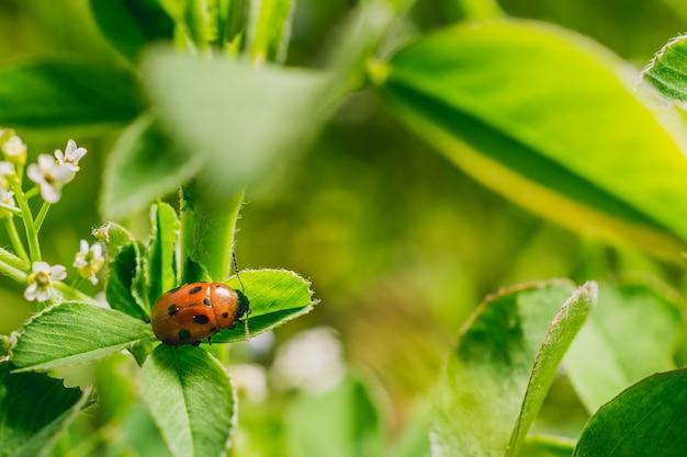 Foto de foco seletivo de uma joaninha em uma folha em um campo capturada em um dia ensolarado