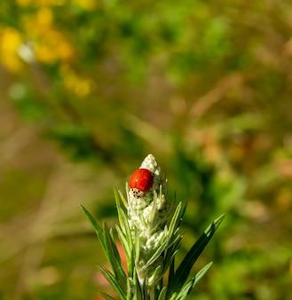 Foto de foco seletivo de uma joaninha sentada em uma flor desabrochando