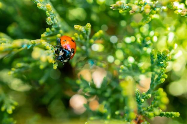 Foto de foco seletivo de uma joaninha sentada em uma linda planta pequena