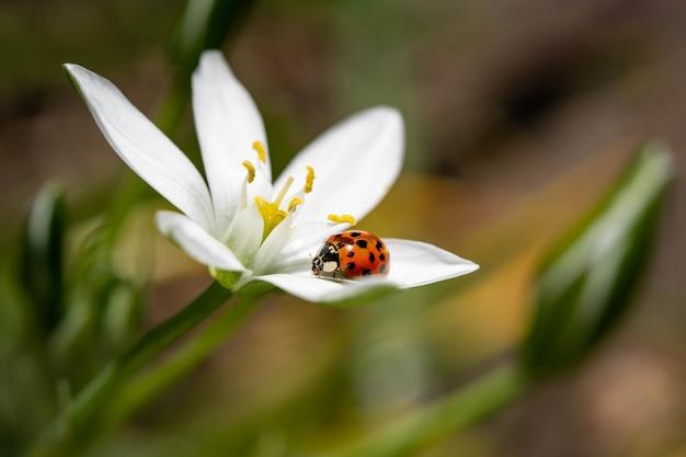 Foto de foco seletivo de uma joaninha sentada na pétala de uma flor