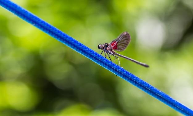 Foto de foco seletivo de uma libélula em um fio azul