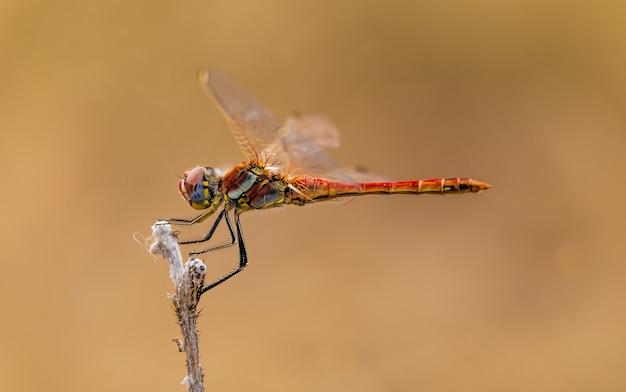 Foto de foco seletivo de uma libélula em um galho com um fundo marrom claro
