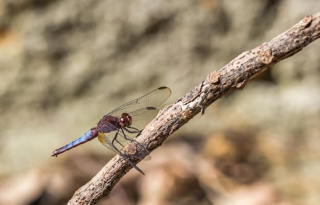 Foto de foco seletivo de uma libélula em um galho