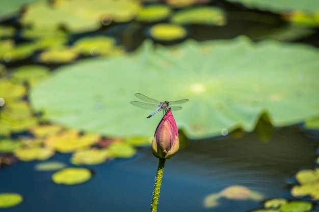 Foto de foco seletivo de uma libélula sentada em um botão de flor