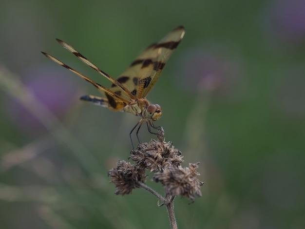 Foto de foco seletivo de uma libélula sentada em uma flor