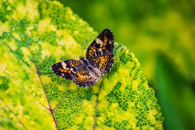 Foto de foco seletivo de uma linda borboleta de cor laranja em uma folha