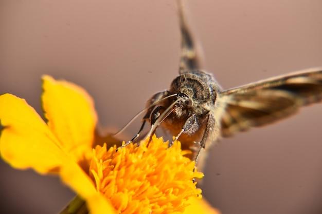 Foto de foco seletivo de uma linda borboleta empoleirada em uma flor amarela brilhante