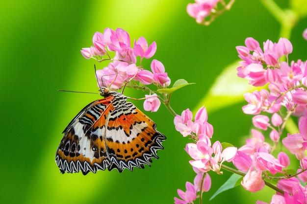 Foto de foco seletivo de uma linda borboleta sentada em um galho com pequenas flores cor de rosa