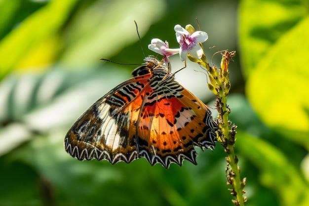Foto de foco seletivo de uma linda borboleta sentada em um galho com pequenas flores