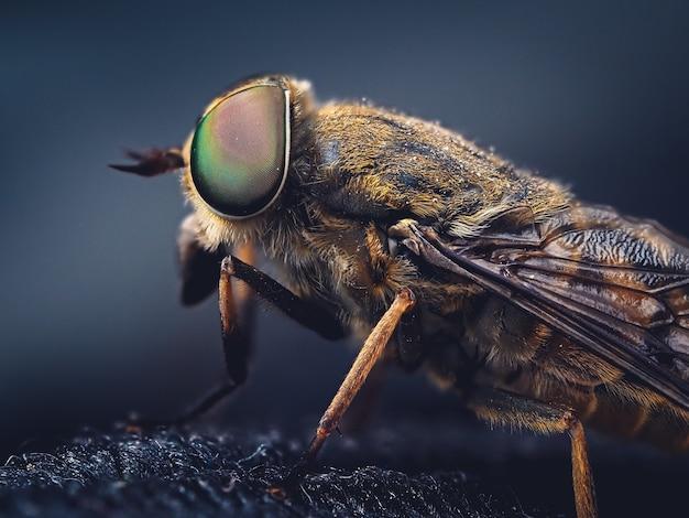 Foto de foco seletivo de uma mosca doméstica