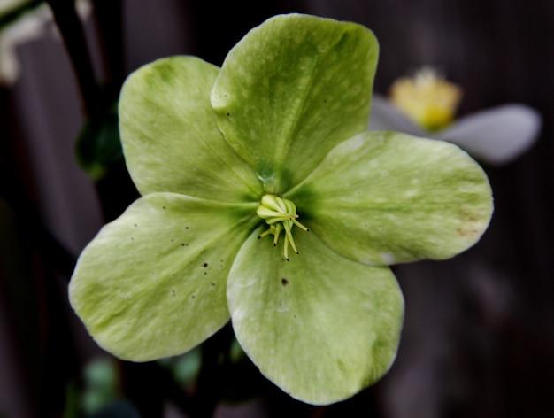 Foto de foco seletivo de uma pequena flor verde com um fundo desfocado