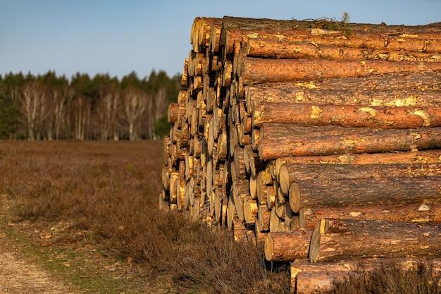 Foto de foco seletivo de uma pilha de árvores cortadas em uma floresta em um solo marrom