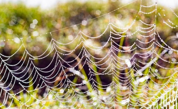 Foto de foco seletivo de uma rede de aranha orvalhada em um campo
