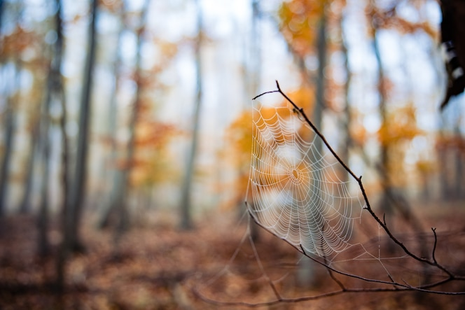 Foto de foco seletivo de uma teia de aranha em um galho em uma floresta de outono