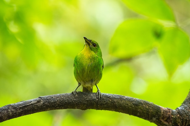 Foto de foco seletivo de uma trepadeira verde empoleirada em um galho