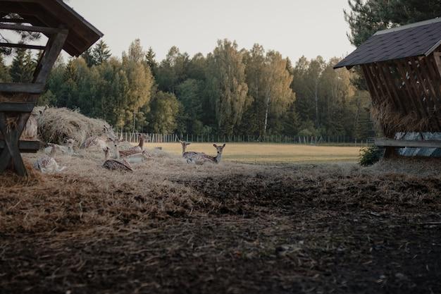 Foto de foco seletivo de veados-de-cauda-branca em uma fazenda