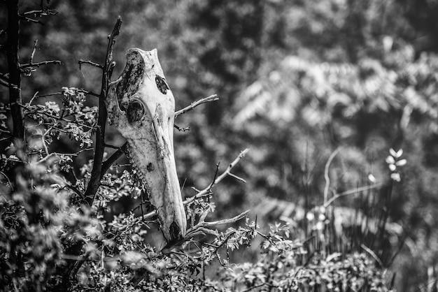 Foto de foco seletivo em tons de cinza de um crânio de animal colocado no topo de galhos