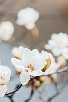 Foto de foco seletivo vertical de lindas flores brancas no galho de uma árvore