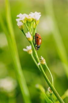 Foto de foco seletivo vertical de um besouro joaninha em uma flor em um campo, capturada em um dia ensolarado