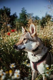 Foto de foco seletivo vertical de um cachorro-lobo parado na vegetação