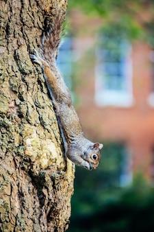 Foto de foco seletivo vertical de um esquilo em uma árvore