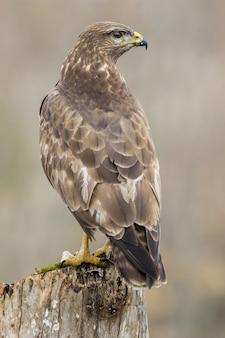 Foto de foco seletivo vertical de um falcão magnífico sentado em um galho grosso de uma árvore