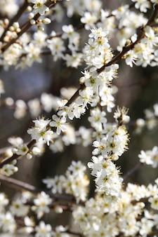 Foto de foco seletivo vertical de um galho de flor de cerejeira