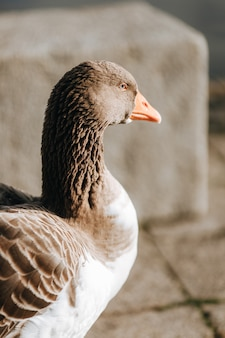 Foto de foco seletivo vertical de um ganso sob a luz do dia