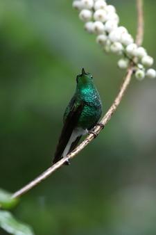 Foto de foco seletivo vertical de um lindo beija-flor verde empoleirado em um galho