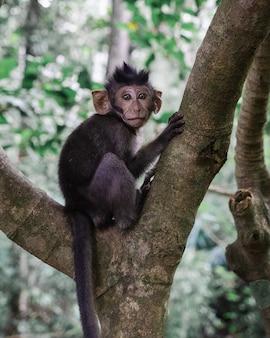 Foto de foco seletivo vertical de um macaco sentado em um galho de uma árvore na selva